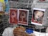 """6 октября 2013 года -\""""День защиты животных\""""."""