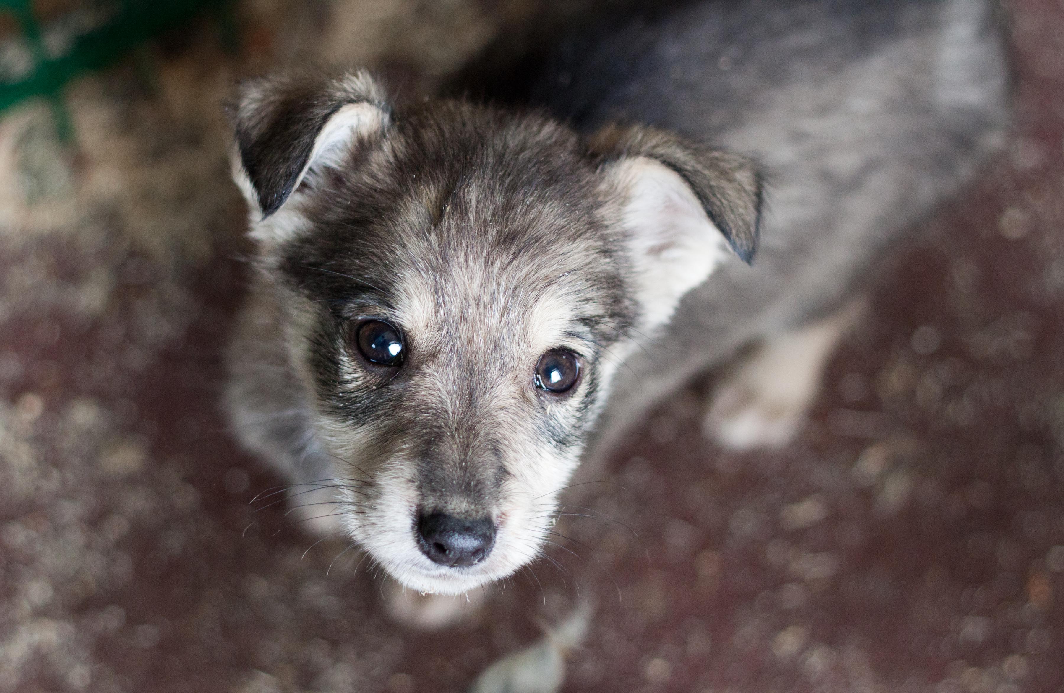 ВВоронеже выбрали новое место под приют для бездомных животных
