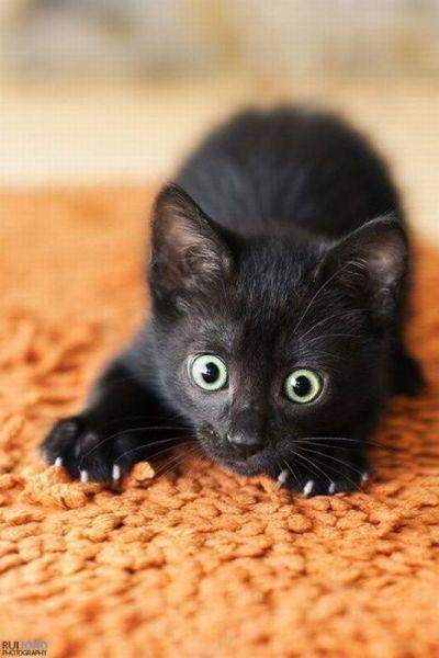 фото чёрный котёнок